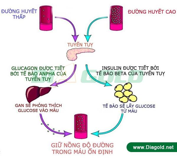 quá trình chuyển hóa đường