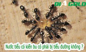 Nước tiểu có kiến bu có phải bị bệnh tiểu đường không