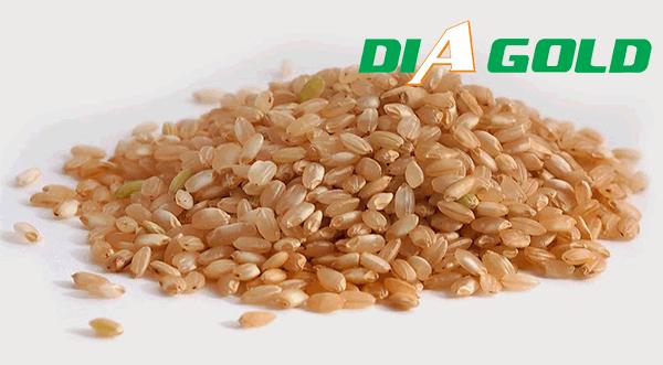 tiểu đường ăn gạo mầm được không