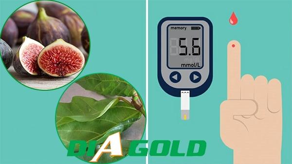 Chữa bệnh tiểu đường bằng lá sung cần lưu ý gì