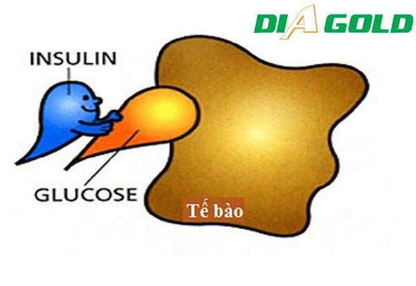 Đề kháng insulin là gì